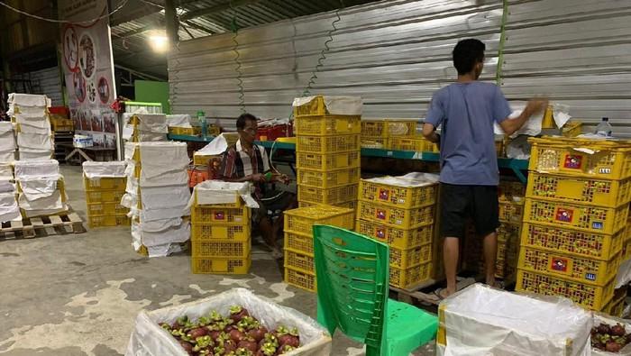 Ekspor manggis ke China terganjal gara-gara virus corona