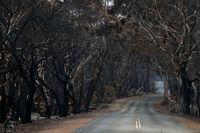 Pulau Kanguru yang dulu jadi tempat wisata kini kehilangan daya tariknya usai kebakaran.