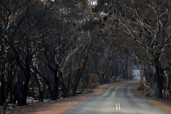 Pohon-pohon hangus dan menghitam. Kobaran api sesekali masih muncul dari balik sisa-sisa pepohonan. (Foto: Getty Images)