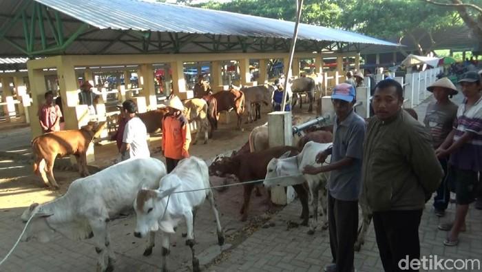 Pasar hewan di Gunungkidul