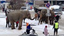 Bikin Kaget Warga, Dua Gajah Asyik Main Salju di Jalan Raya