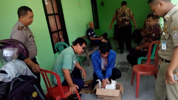 Pemeriksaan kucing di Desa Jaten oleh tim gabungan Pemkab Karanganyar, Rabu (29/1/2020).