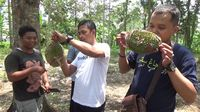 Creamy Manis! Durian Mentega dari Lereng Gunung Semeru