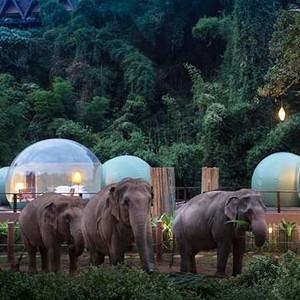Foto: Hotel Gelembung Kaca di Hutan Gajah Seharga 7,9 Juta