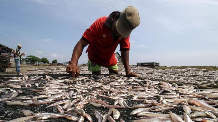 Pekerja menjemur ikan teri atau bilis (Engraulidae) kualitas ekspor di kawasan sentral produksi ikan kering Lhokseumawe, Aceh, Kamis (30/1/2020). Dalam kondisi cuaca normal produksi ikan teri untuk kebutuhan pasar nasional Sumatera,  Jawa dan pasar ekspor Malaysia tembus 8-9 ton perhari dengan harga  Rp110.000 hingga Rp130.000 per kg. ANTARA FOTO/Rahmad/pd.