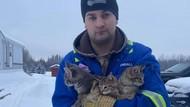 Cerita Petugas Minyak Selamatkan Kucing Beku dengan Kopi