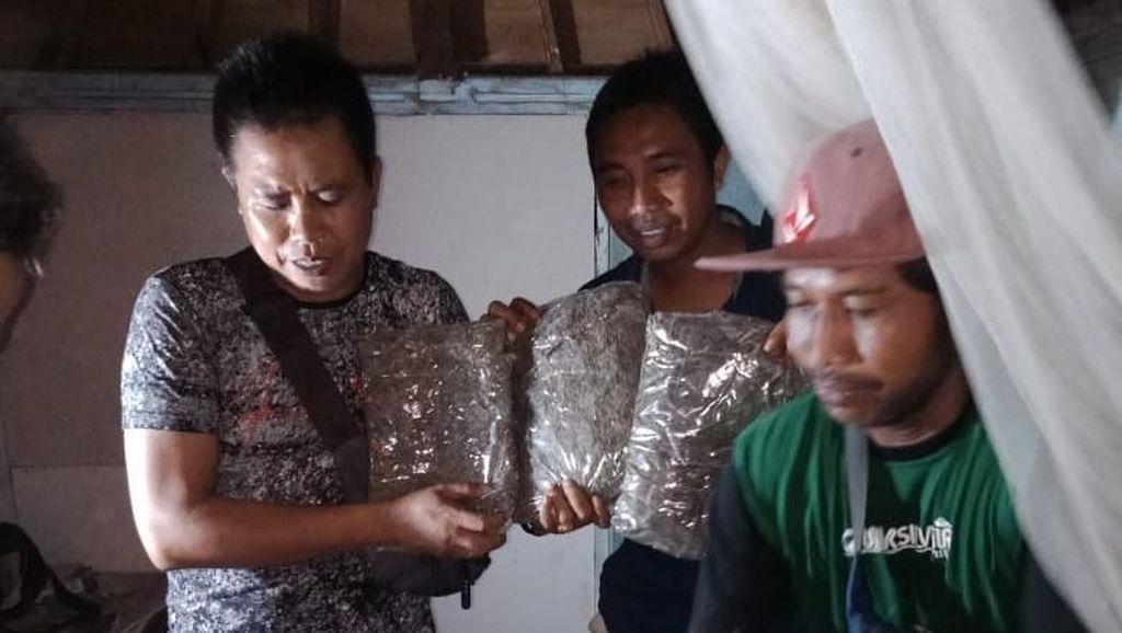 5 Kg Ganja Diamankan Polisi di Gili Trawangan Lombok
