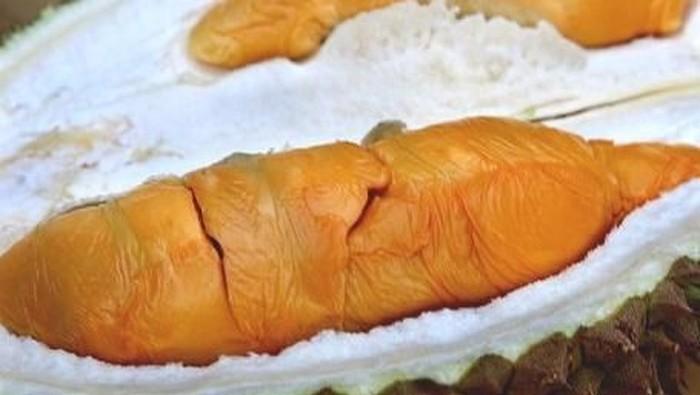 durian populer