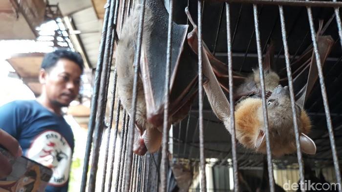 Kelelawar yang dijual di Pasar Depok, Solo, Jumat (31/1/2020).