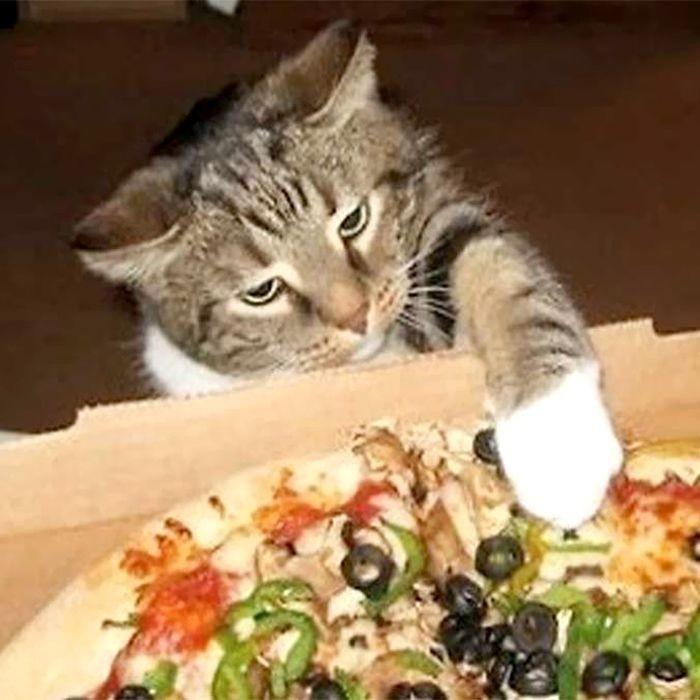 kucing curi makanan