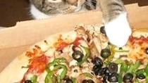 Meong! Kocaknya Aksi Para Kucing yang Ketahuan Mencuri Makanan