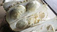 Asyik! Di Kebun Ini Bisa Bersantai Sambil Cicipi Beragam Durian Lezat
