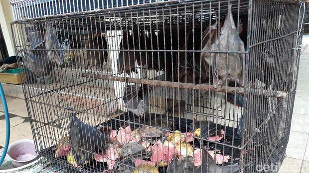 Cegah Virus Corona, Pemkot Solo Pantau Perdagangan Kelelawar