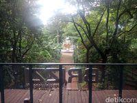 Dari lantai 3 kafe, kita bisa melihat pemandangan seluruh hutan Arboretum.