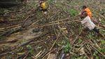 Sampah yang Ganggu Transportasi Sungai di Kalsel Dibersihkan