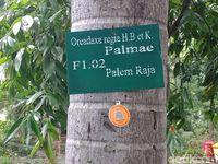 Barcode yang digantung pada pohon menyediakan informasi mengenai pohon tersebut.