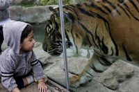 Kebun Binatang Latih Harimau Pakai Parfum Calvin Klein