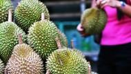 Ada Potensi Ekspor Durian ke China hingga Jepang Rp 7 M