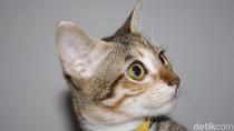 Viral ITS Bebas Kucing Kampus, Ini Penyakit yang Dibawa Si Meong Liar