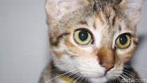 Pejabat Hong Kong Menduga Kucing Sebarkan Virus Corona di Pasar Basah