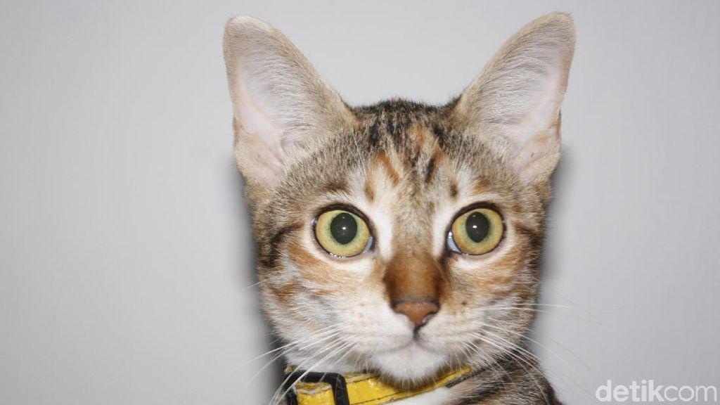 Viral Video 3 Perempuan Injak-injak Kucing Hingga Mati, Begini Faktanya