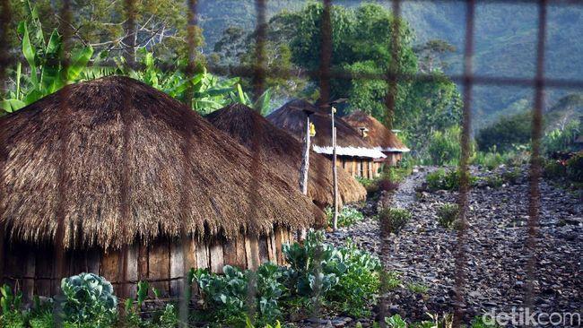Honai Rumah Adat Papua Dan Keunikannya