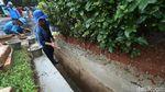 Usai Banjir, Pasukan Biru Perbaiki Saluran Air di Monas