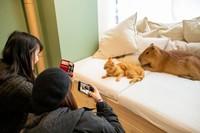 Capybara di kafe itu namanya Tawashi. Ia merupakan hewan yang ramah dan suka tiduran di sofa. Dengan karakter lembutnya itu, ia bisa hidup rukun bersama kucing-kucing. (Foto: capyneko.cafe)