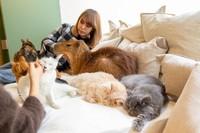 Kafe bernama Capy-Neko-Cafe ini terletak di Kichijoji, Tokyo.Konsep menggabungkan capybara dan kucing sendiri merupakan yang pertama di Jepang. Meskipun kombinasi ini awalnya terlihat ganjil, pengunjung terlihat menikmati perpaduan tersebut. (Foto: capyneko.cafe)