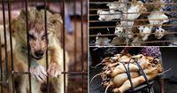 Tak Takut Corona, Perusahaan di China Dorong Masyarakat Tetap Makan Daging Anjing