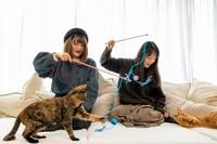 Sementara itu, kucing-kucing di Capy-Neko Cafe adalah kucing-kucing yang diselamatkan dari jalanan dan mencari pihak yang mau mengadopsi mereka. (Foto: capyneko.cafe)