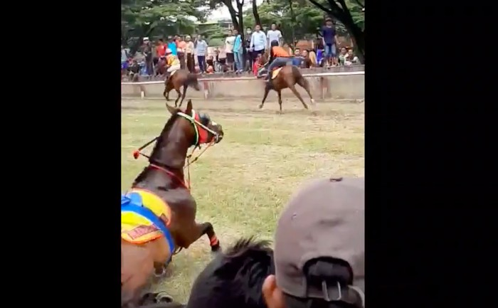 Kuda pacuan tabrak penonton dalam lintasan di Polewali. (Dok Istimewa)
