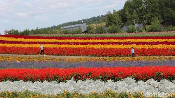 Terletak di Shinsei Daisan, Biei-cho, Kamikawa-gn, Hokkaido. Taman bunga dikelilingi oleh gunung Tokachi-dake dan Furano-dake.