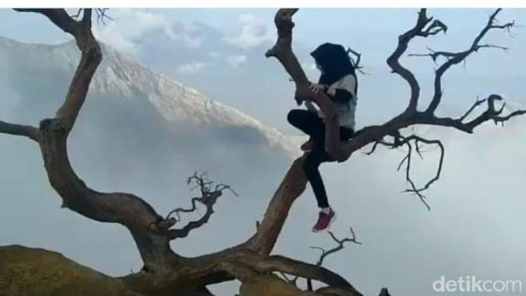 Viral, Wisatawan Lakukan Aksi Berbahaya di Atas Pohon Puncak Kawah Ijen