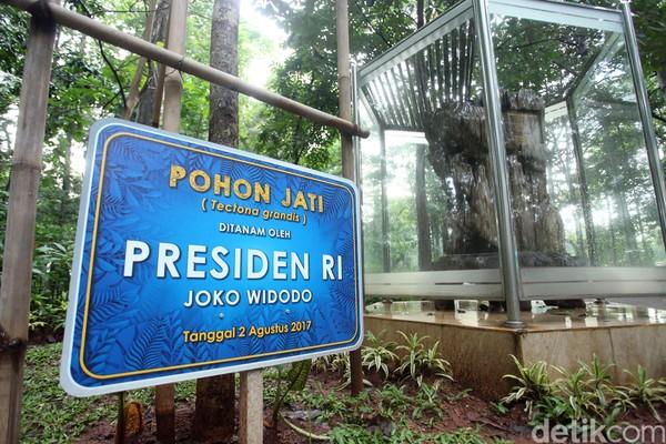 Presiden Joko Widodo ikut menanam pohon jati pada 2 Agustus 2017.