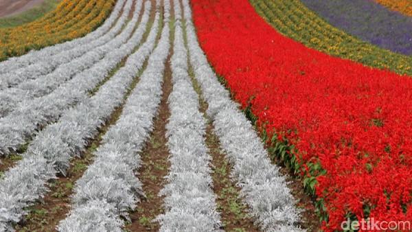 Untuk memasuki bukit warna-warni ini, pengunjung tidak perlu membayar. Tetapi jika Traveler ingin berpartisipasi menjaga kelestarian bunga-bunga, Anda bisa memberikan donasi sekitar 200 yen atau sekitar Rp 25.000/orang. Cukup murah kan?