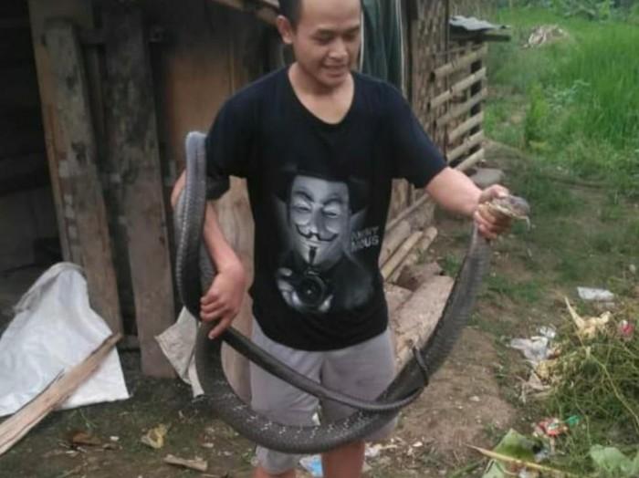 Warga Cianjur Tangkap King Cobra