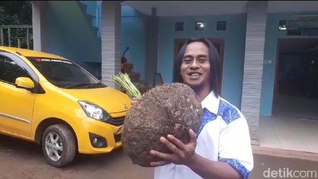Nama Paidi tengan menjadi perbicangan. Pria 37 tahun yang tinggal di Desa Kepel, Kecamatan Kare, Kabupaten Madiun ini menjadi seorang miliarder setelah membudidayakan porang.