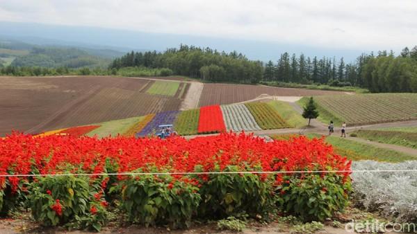 Kebun bunga ini memiliki luas sekitar 15 hektar dan memiliki beragam jenis bunga seperti lavender, cosmos bunga matahari dan lainnya. Kebun bunga ini dikenal dengan Panoramic Flower Gardens Shikisai-no-oka.