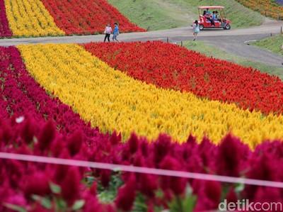 Taman Bunga Cantik di Kota Terdingin Jepang