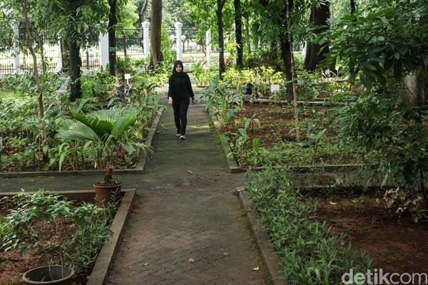 Di hutan seluas sekitar 4 hektar ini, tumbuh ratusan pohon dari 52 jenis spesies baik endemik Indonesia maupun khas negara lain.