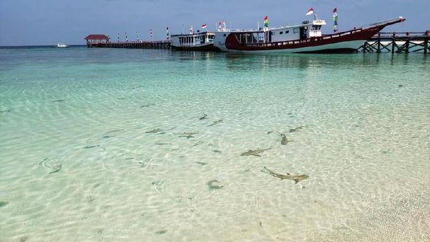 Pulau Tinabo, Surganya Hiu dari Indonesia