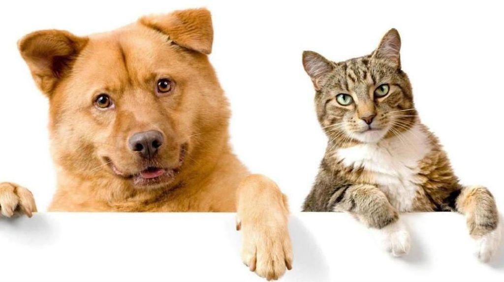 Apa Benar Kucing dan Anjing Akan Mati Kalau Makan Cokelat?