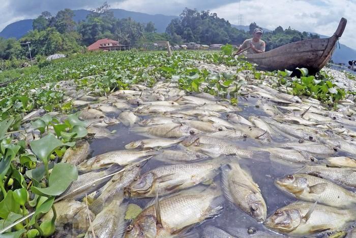 Ada sejumlah 63 ton ikan keramba mati di Kabupaten Agam, Sumatera Barat. Ikan-ikan itu diketahui mati akibat angin kencang yang melanda daerah tersebut.