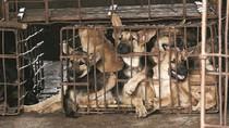 Tak Hanya di China, Jutaan Anjing di Kamboja Juga Dipotong untuk Dimakan
