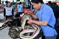 Waspada Virus Corona, Pasar Tomohon Berhenti Jual Kelelawar