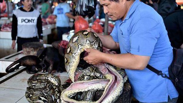 Kelelawar di Pasar Tomohon