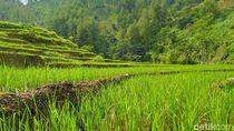 Potret Hijau Desa Cawet di Kabupaten Pemalang