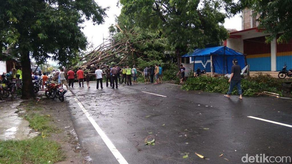 Video: Blitar Diterjang Hujan Angin, Puluhan Pohon Tumbang