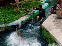 Warga membersihkan saluran irigasi di Bendung Lepen